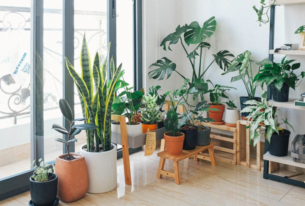 house plants and indoor plants
