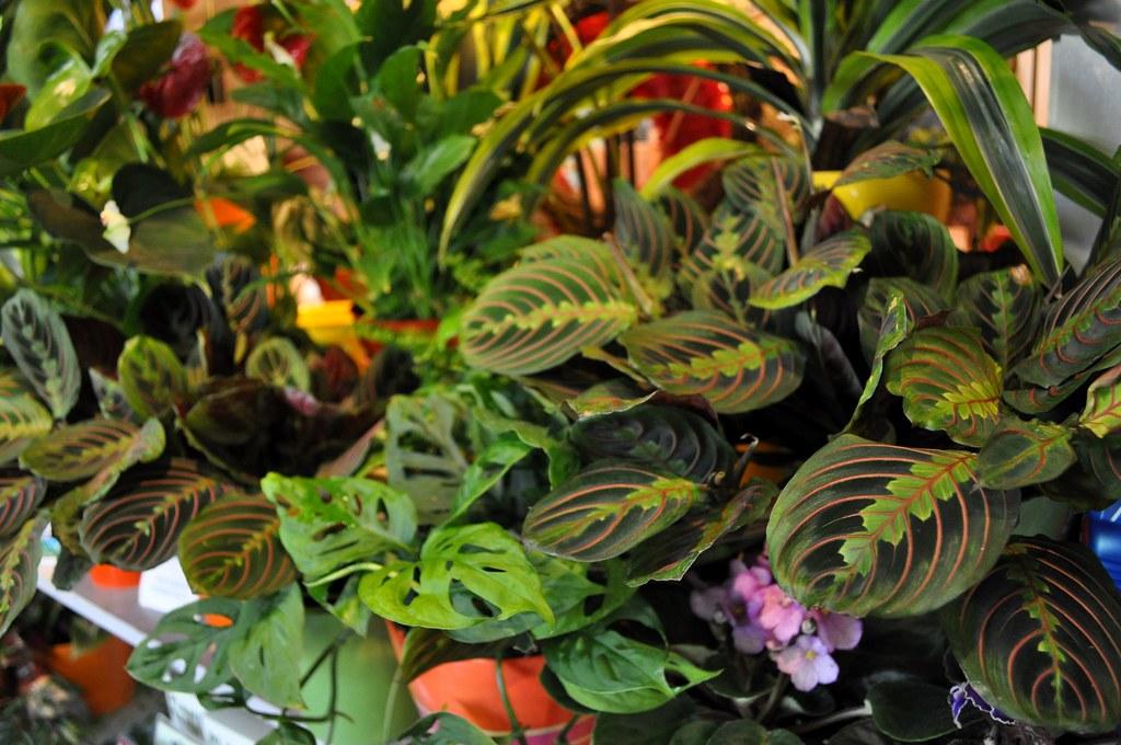 houseplants reviews indoor palnts