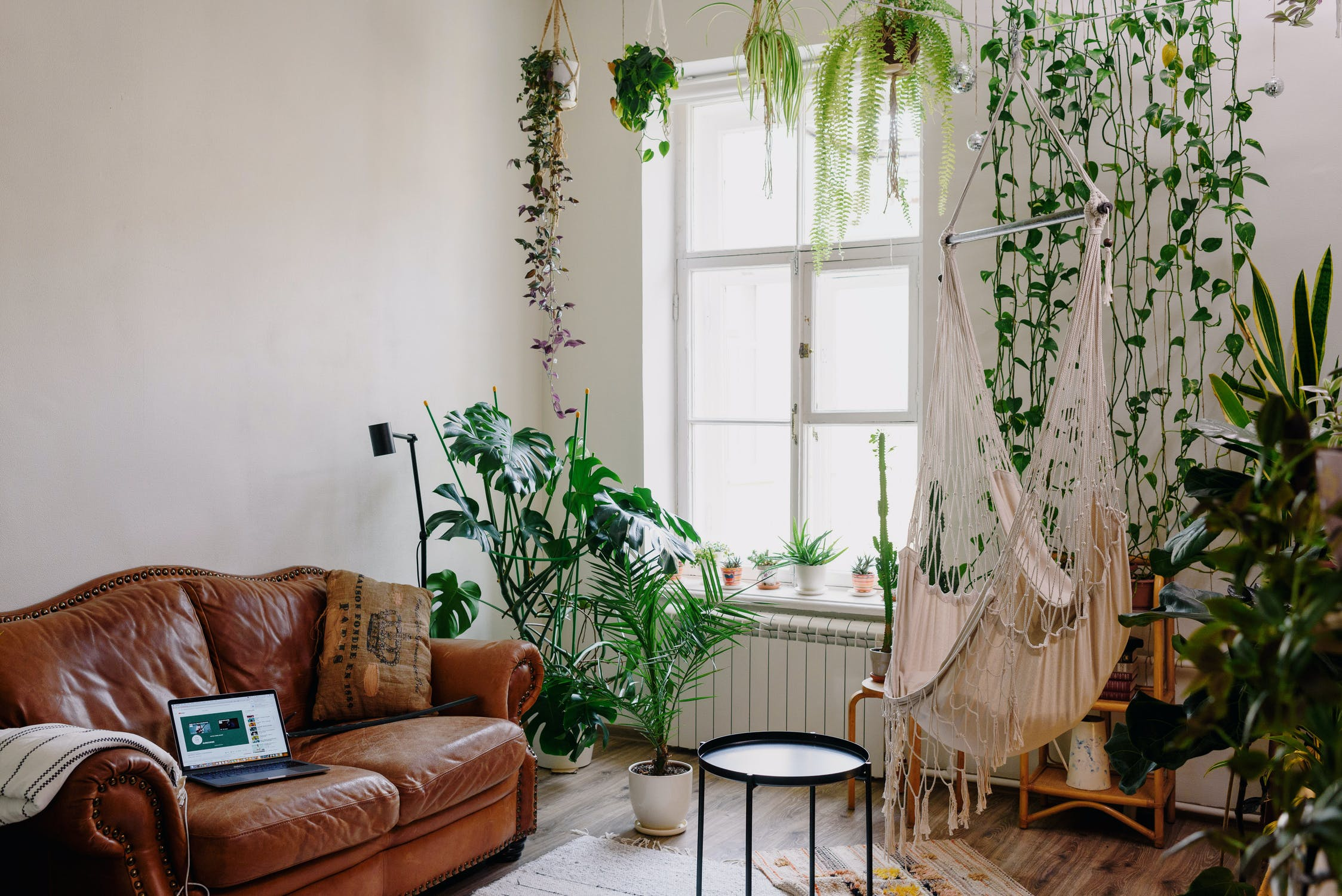 ivys-vines-climbing-and-trailing-plants