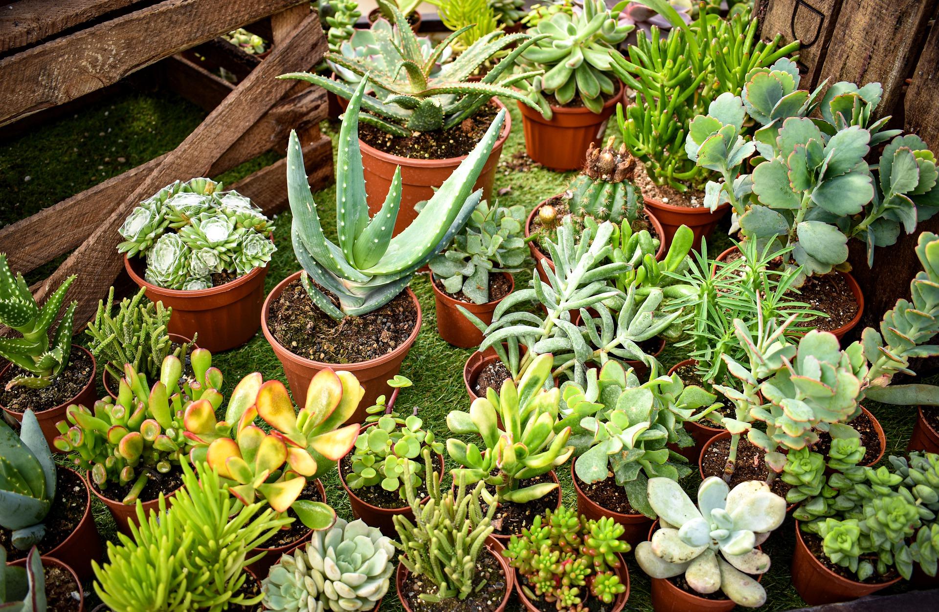 succulents houseplants reviews