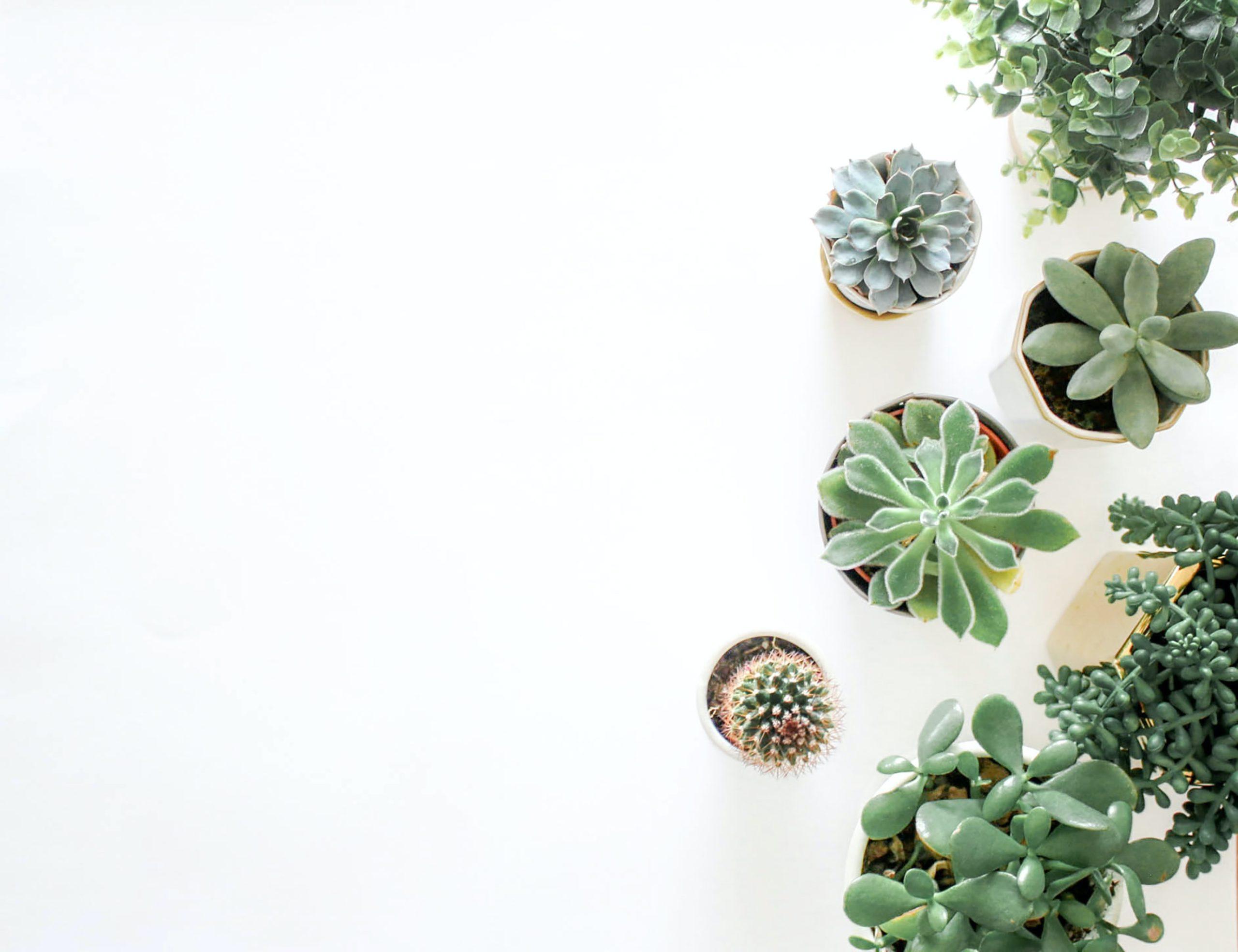 succulents great indoor house plants
